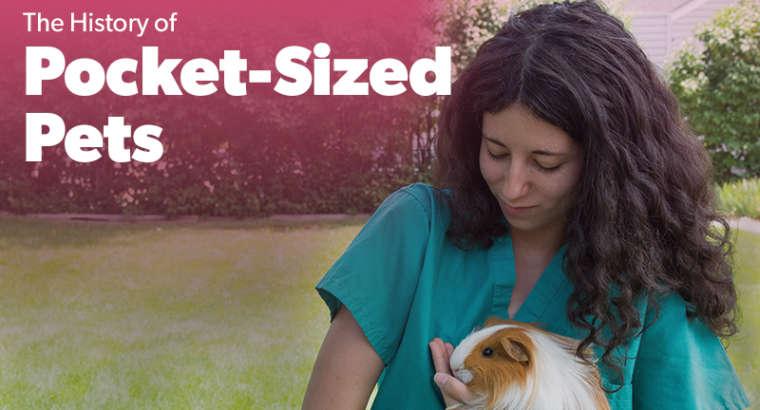 Pocket Sized Pets
